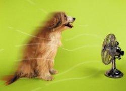 cane condizionatore